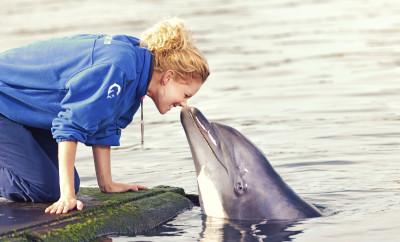 Dolfijnen in de hoofdrol 2